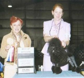 Zorcon Poodles: Ch. Zorcon Take It To The Limit (Apollo)