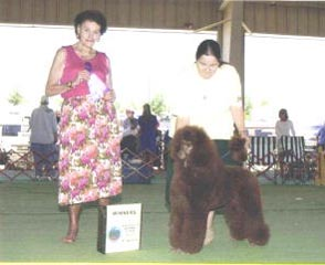 Zorcon Poodles